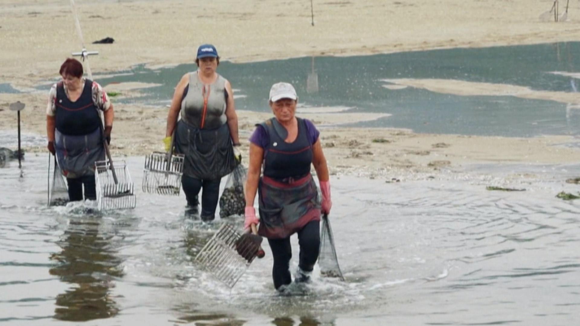 Actuelles - Pêcheuses en Galice en quête de reconnaissance