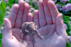 Une image de l'animation d'accueil sur le site de Magic Leap