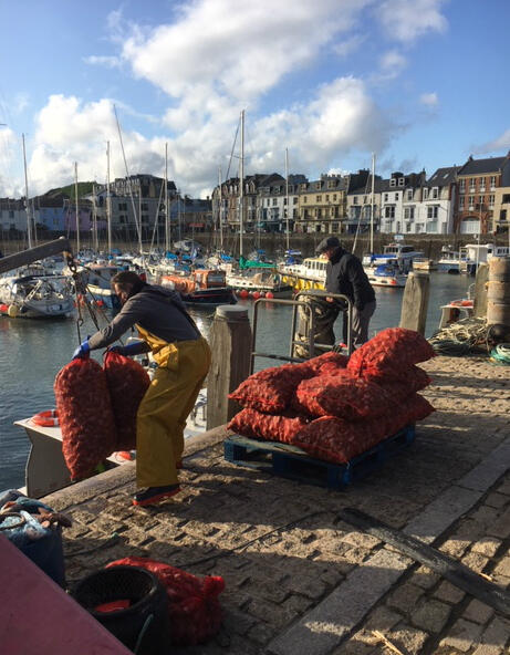 Gavin Vaughan hauls the first whelks of the season ashore in the harbour at Ilfracombe