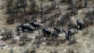 Botswana said it was overturning a 2014 ban introduced to reverse a decline in the elephant population with ruling party lawmakers claiming wild animal numbers have become unmanageable