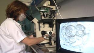 Une scientifique observe une division cellulaire d'un embryon au cours d'un programme de procréation médicale assistée.