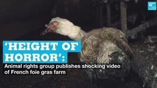 A video released by animal rights group L214 on Thursday, August 20, shows shocking conditions inside a duck breeding farm in southwest France.