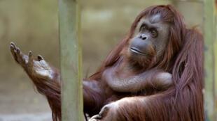 Sandra est locataire du zoo de Buenos Aires depuis septembre 1994.