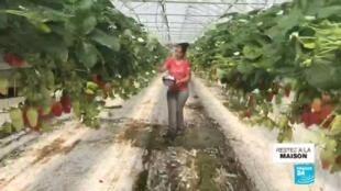 2020-03-31 11:09 Coronavirus : En France, les commerces appelés à soutenir l'agriculture nationale