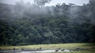 Gabon is heavily forested and the timber industry is hugely important for the economy