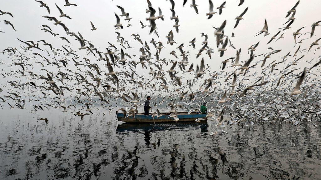 Los hombres alimentan gaviotas a lo largo del Río Yamuna en una mañana de niebla en Nueva Delhi, India.