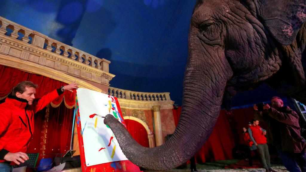 La protagonista de la foto es Sandra, una elefanta de 42 años, que pinta con su trompa en un circo en Budapest, Hungría.