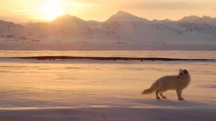El archipiélago Svalbard, también conocido como Spitzberg, registró 21,2ºC en un mes en que sus temperaturas son del orden de 5 a 8ºC