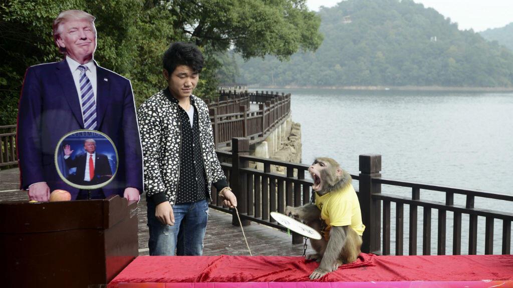 Peu avant l'élection américaine, dans un parc chinois, un singe choisit Donald Trump comme future président des États-Unis