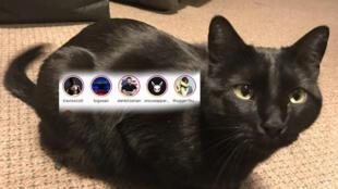 Ce chat est un grand fan de Dan Bilzerian visiblement.
