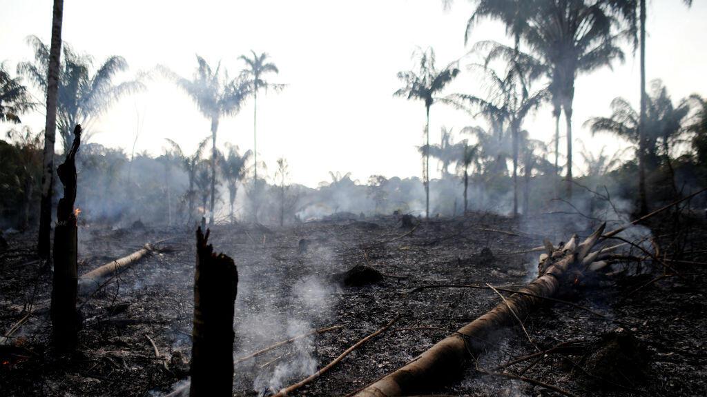 Se ve un tronco carbonizado en un tramo de la selva amazónica que fue quemado recientemente por agricultores en Iranduba.Agosto 20 de 2019.