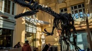 الهيكل العظمي للديناصور في ليون في 7 كانون الاول/ديسمبر 2016