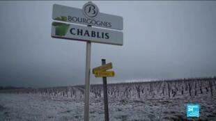 2021-04-09 10:12 Most of France's grape harvest destroyed