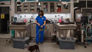 un chien en consultation chez un vétérinaire le 26 avril 2020