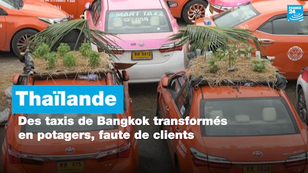 Thaïlande : des taxis de Bangkok transformés en potagers, faute de clients
