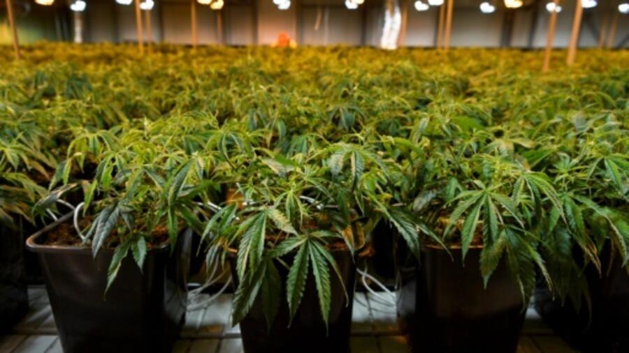 High There, une appli de rencontre pour les fumeurs de weed