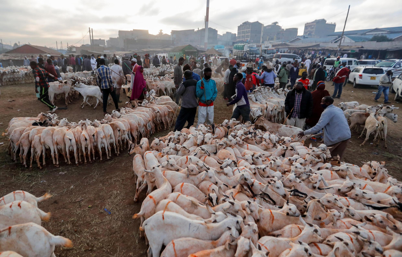 Des fidèles musulmans achètent des chèvres à un marché au bétail lors des célébrations marquant la fête musulmane de l'Aïd al-Adha en pleine pandémie de coronavirus à Nairobi, Kenya, le 31 juillet 2020.