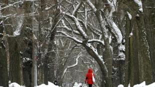 الثلج يكسو الأشجار  في سنترال بارك في مدينة نيويورك في 11 شباط/فبراير 2021