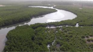 Rives du fleuve Casamance, dans la région sénégalaise du même nom.