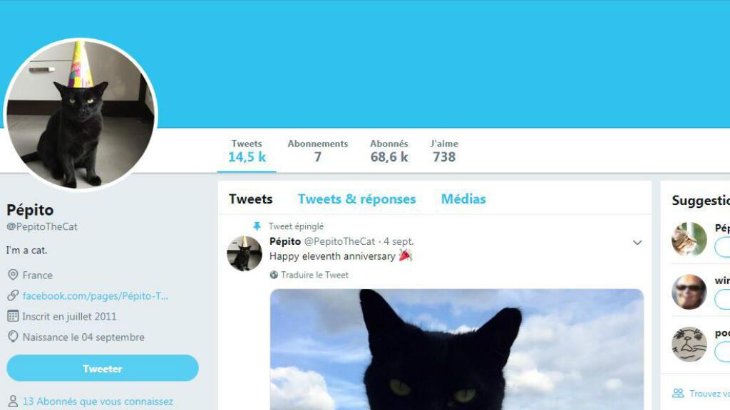 """Capture d'écran du compte Twitter """"Pépito""""."""