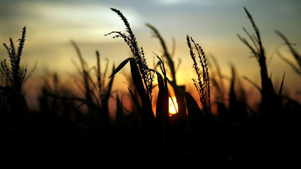 Imagen de archivo de unos cultivos de maíz al atardecer cerca a Rafaela, Argentina. 9 de abril de 2018.