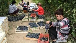 Uzbekistan is undertaking an ambitious state-led winemaking drive in the majority-Muslim country
