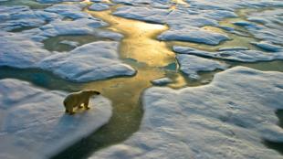 El informe de BioScience asegura que nos queda muy poco tiempo para encontrar una solución al cambio climático.