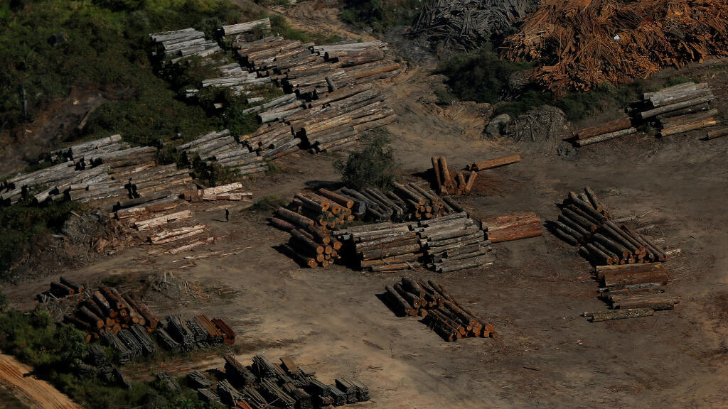 """Montones de madera durante la """"Operación Ola Verde"""" realizada por agentes del Instituto Brasileño de Medio Ambiente y Recursos Naturales Renovables, o Ibama, para combatir la tala ilegal en Apui, en la región sur del estado de Amazonas en 2017."""