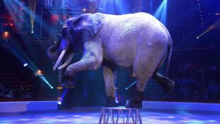Elephant cirque maltraitance animale