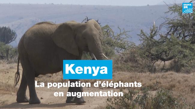 Au Kenya, la population d'éléphants en augmentation