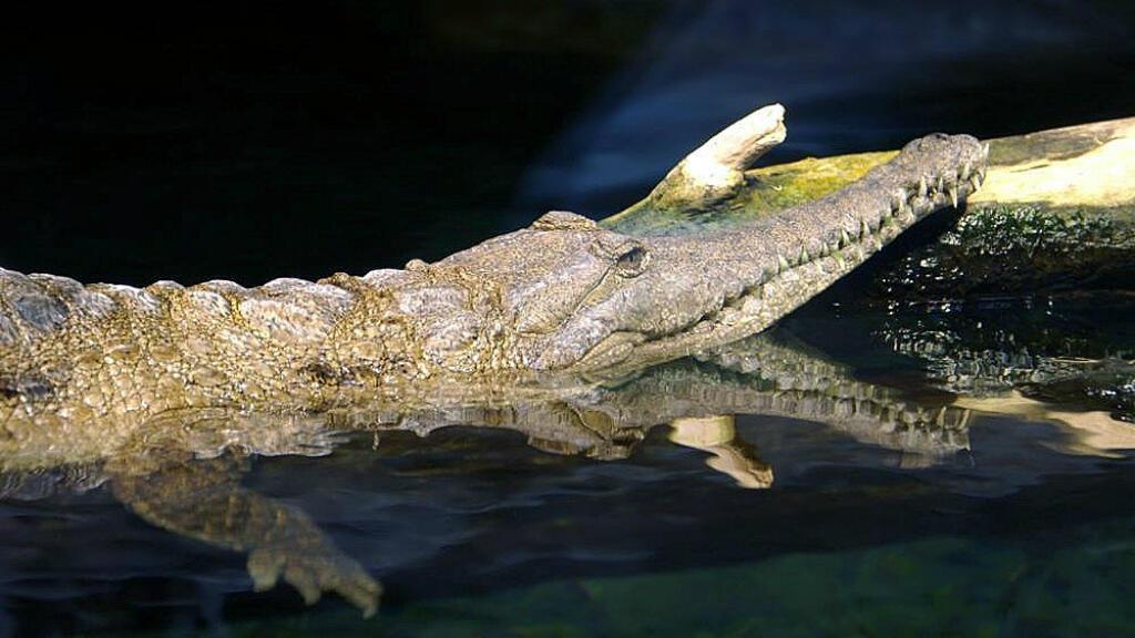 En quarante ans, 88 % des grands animaux d'eau douce ont disparu