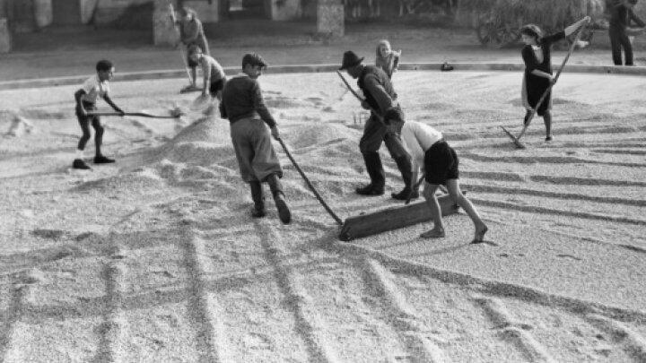 صورة تظهر أطفالا يقومون بتجفيف الحبوب في قرية إيطالية خلال الحرب العالمية الثانية