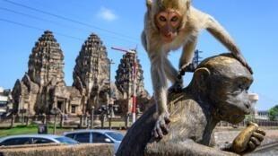 Un mono sube a la estatua de un macaco ante el templo budista de Prang Sam Yod de Lopburi, en Tailandia, el 20 de junio de 2020