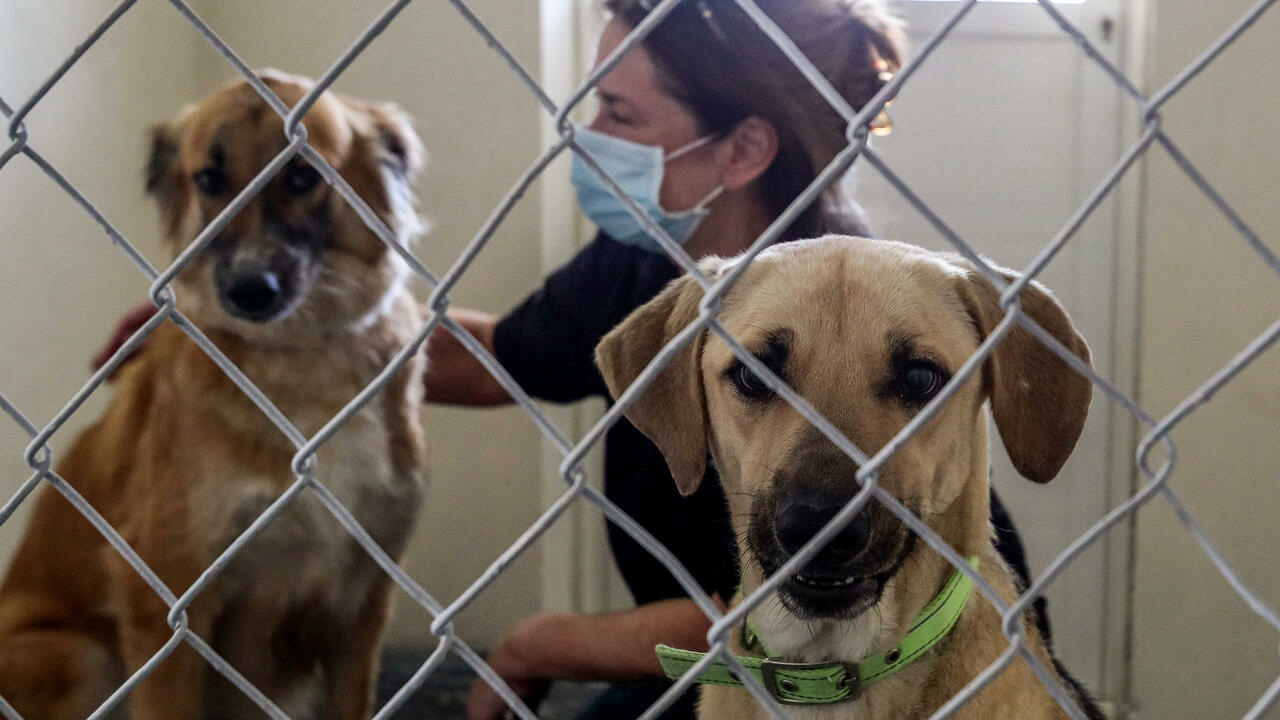 Ruff deal: Animal shelter braces for surge as expats abandon Qatar - France 24