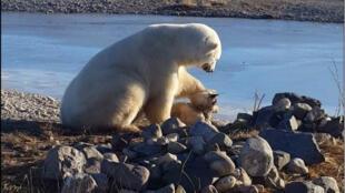 Un câlin entre un ours polaire et un chien était sans doute une trop belle histoire pour 2016.