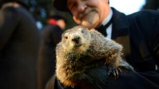 El cuidador John Griffiths sostiene a la marmota Phil en el Día de la Marmota en Punxsutawney. 2/2/17