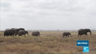 en foco - Elefantes Kenia