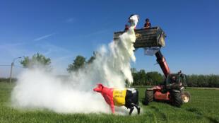 un productor lanza leche en polvo sobre una figura de una vaca con la bandera de Bélgica durante una protesta por la crisis generada por la pandemia de Covid-19 el 7 de mayo de 2020 en Laarne