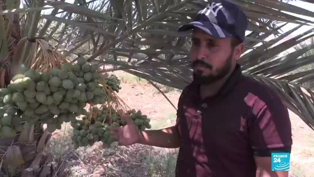 فلسطيني في غور الأردن