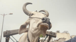 Invisible_Demons_still_3 Cow