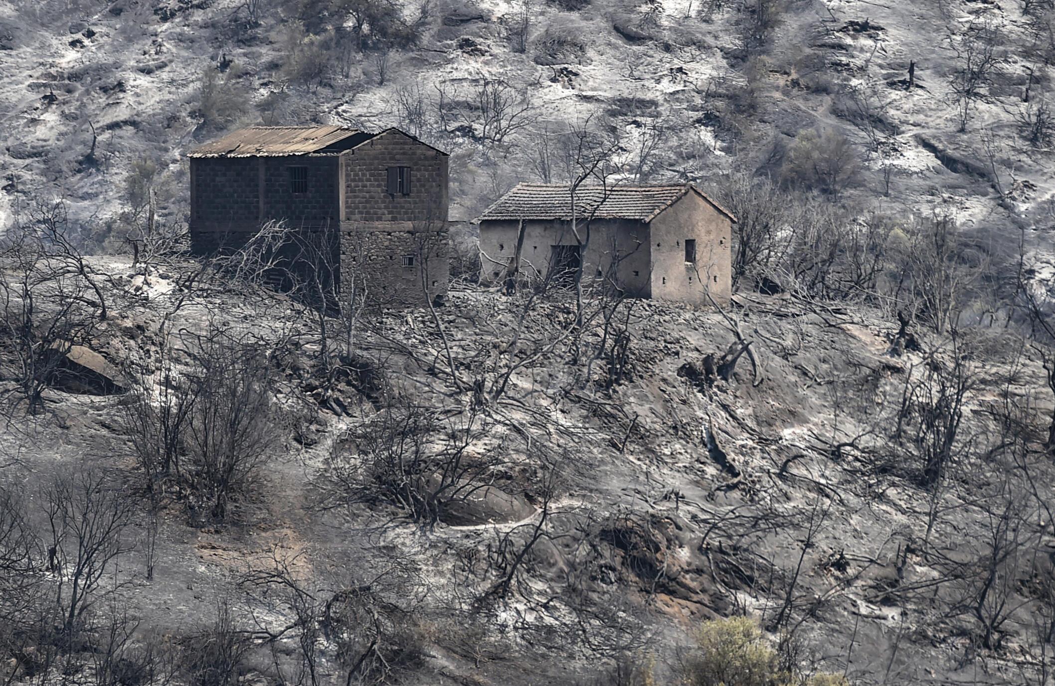 Des maisons incendiées par des feux de forêt dans les jungles de la région de Kabili à l'est de la capitale algérienne se dressent au milieu d'arbres calcinés.