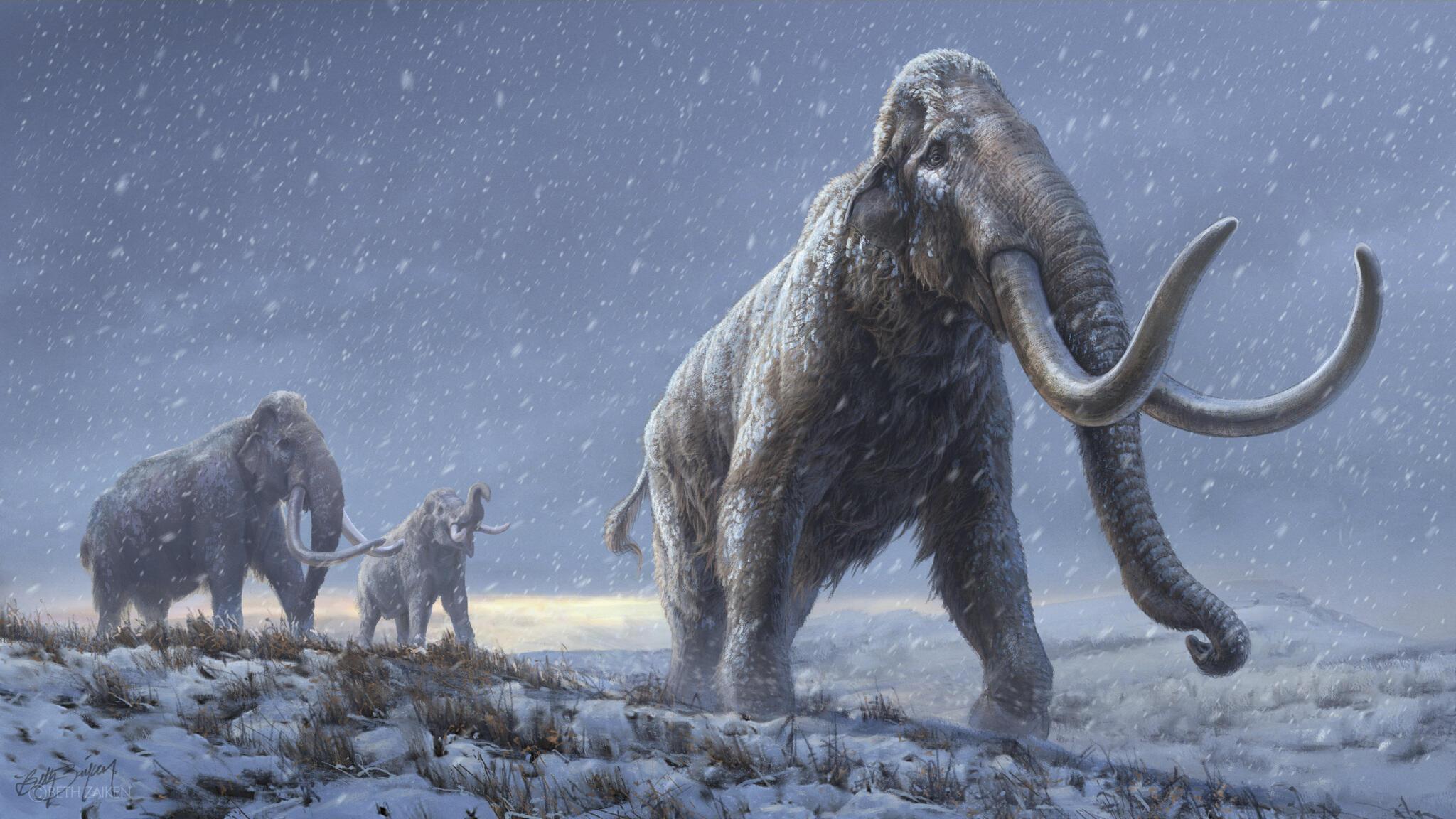 140921-mammouth-m