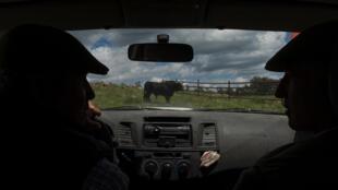 Un éleveur espagnol de taureaux, Juan Pedro Domecq Morenés avec un employé dans sa ferme en Espagne, le 28 avril 2020