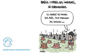 Amazonie cartooning for peace info dessin