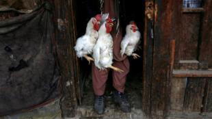 En el mercado de Ka Faroshi docenas de gallos son vendidos a diario, aquí un hombre con tres de ellos el 18 de enero de 2018.