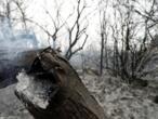 الحرائق تلتهم مساحات واسعة في لبنان وسوريا وسط عجز فرق الإطفاء عن إخمادها