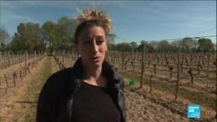 2021-04-09 10:12 Baisse des températures en France : de nombreuses récoltes détruites par le gel