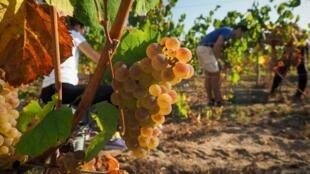 Jean Castex a annoncé une enveloppe supplémentaire de 80 millions d'euros pour soutenir les viticulteurs