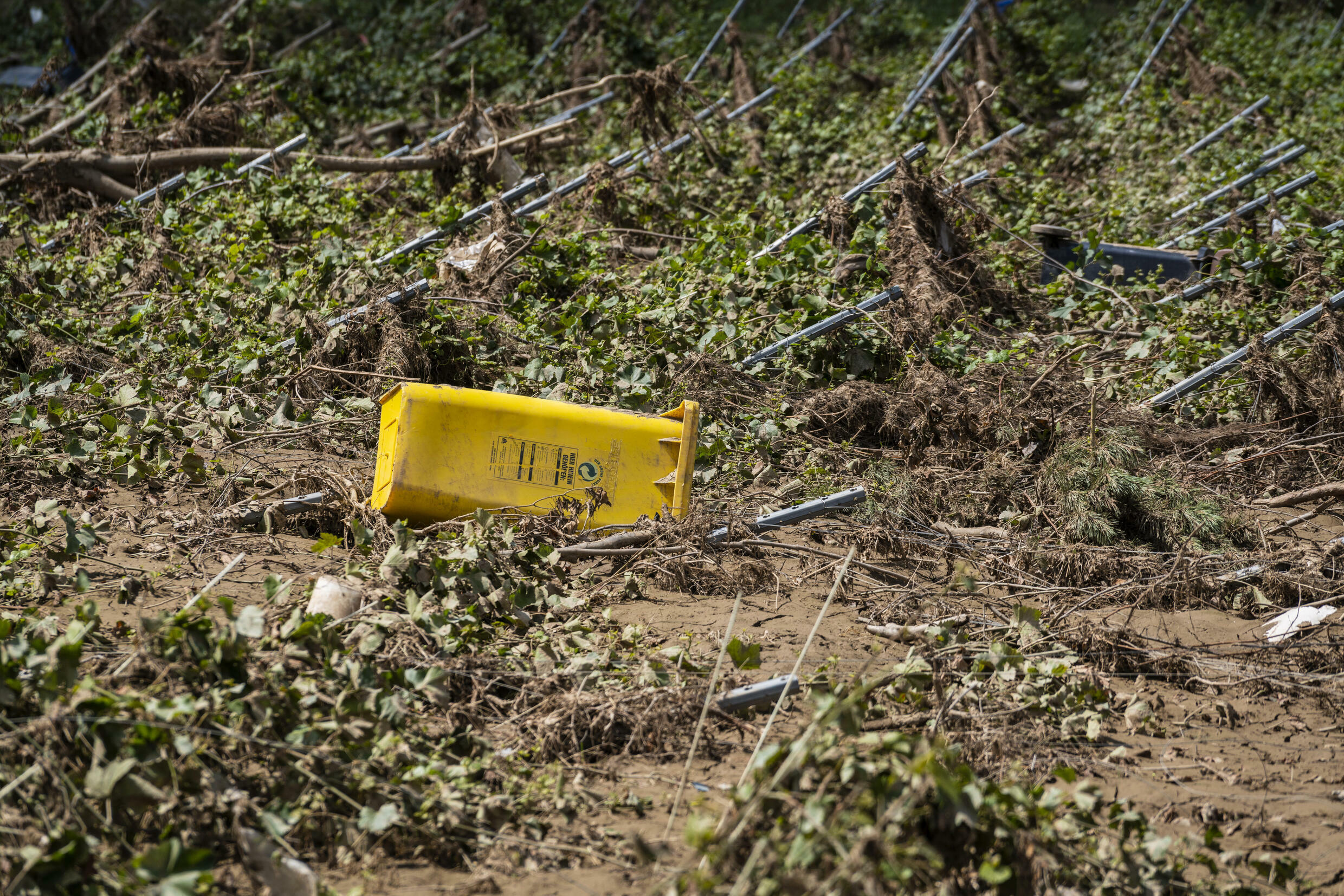 Wine production in the Ahrweiler region remains very uncertain