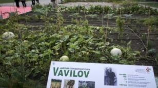 Un jardin de plantes venant de l'Institut russe Vavilov existe depuis 2016 à Ecully